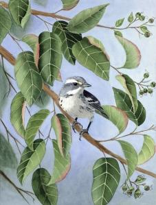 Diane Pope bird watercolor
