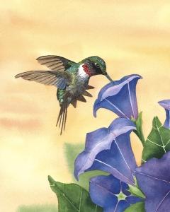 Diane Pope hummingbird watercolor